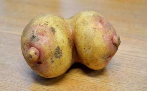 Овощи, не похожие сами на себя (17 фото)