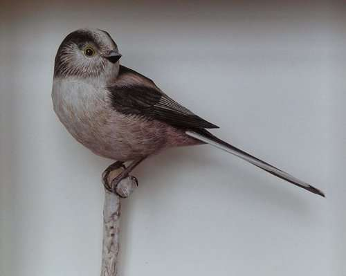 Невероятно реалистичные бумажные птицы Йохана Шерфта (18 фото)