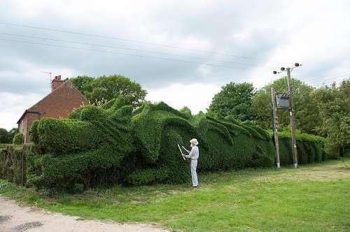 Живая изгородь в форме дракона (6 фото)