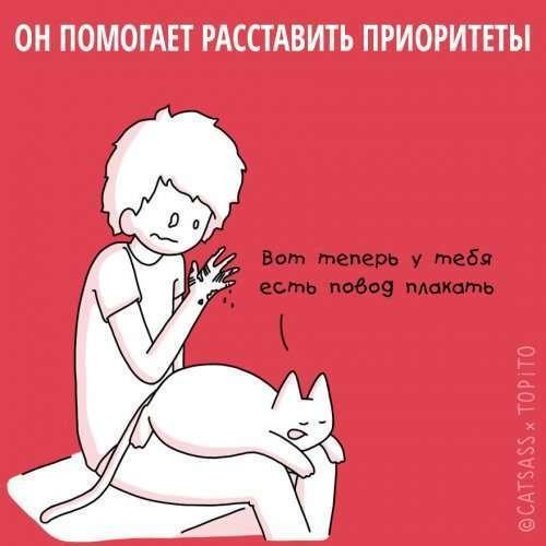 Убедительные причины завести кота после расставания (10 фото)