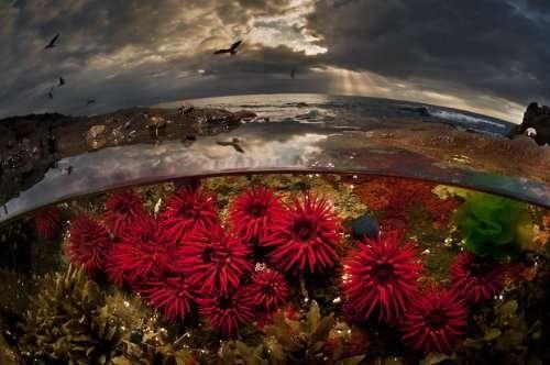 Захватывающие дух фотографии, сделанные между двумя мирами (32 фото)