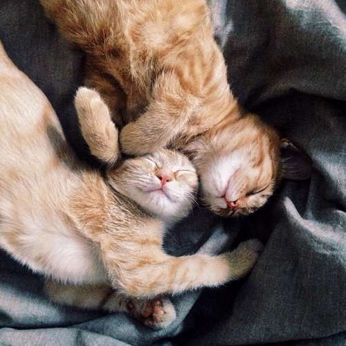 Неразлучные рыжие братья, найденные в саду котятами (18 фото)