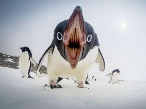 Забавные животные с необычного ракурса (15 фото)