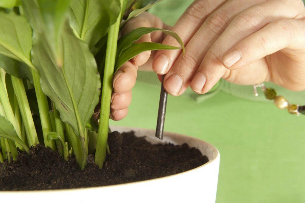добрива для рослин